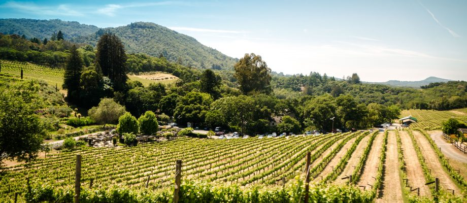 Sonoma Wine Country with Tweens