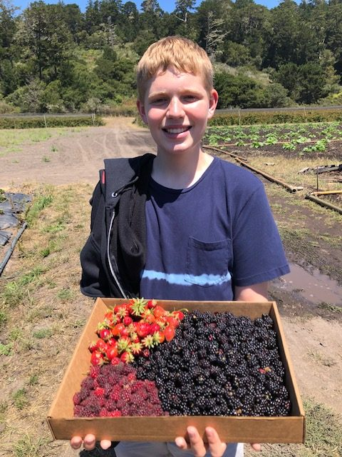 Berry picking with tweens