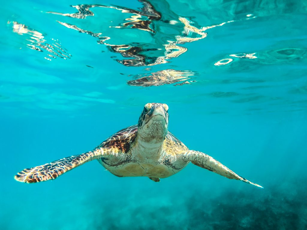 Sea Turtle #savetheturtles Photo by Cédric Frixon on Unsplash