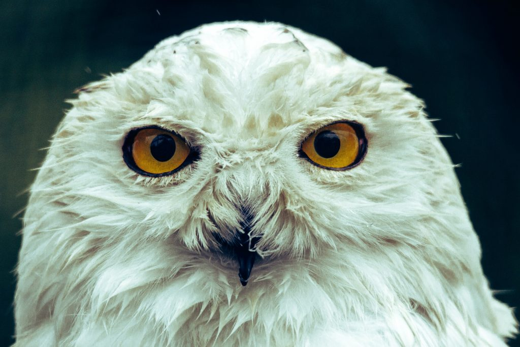 Books Hedwig would approve of Photo by Frida Bredesen on Unsplash